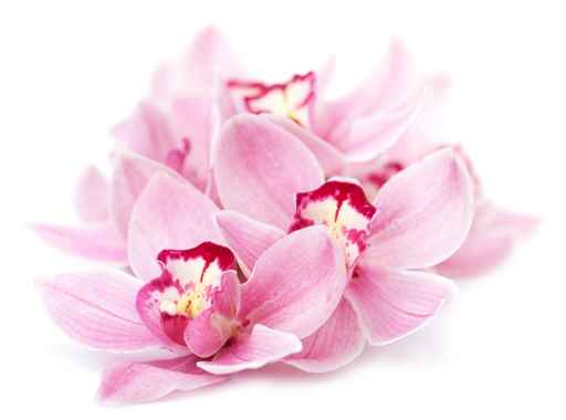 Panele szklane - orchidea