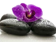 Panele szklane - orchidea, kamienie