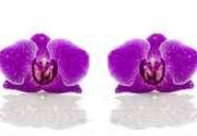 Panel szklany - orchidee