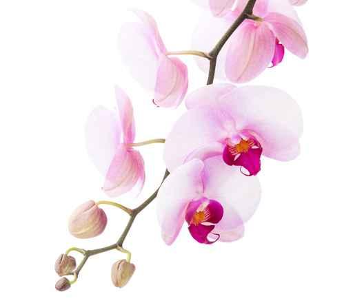 Grafika na szkło - orchidea