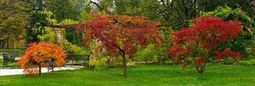 Grafika na szkło - drzewa