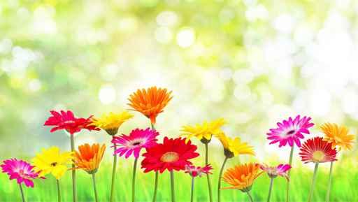 Grafika na panele - kwiaty